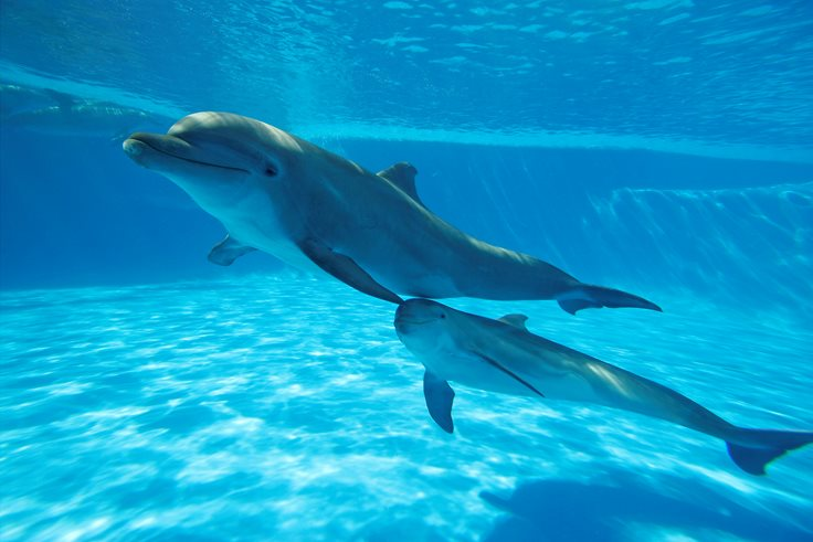 Dolphin Facts And Pictures 45