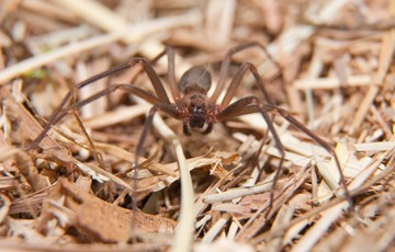 84 Amazing Spiders Facts | Fun Facts about Spiders - photo#23