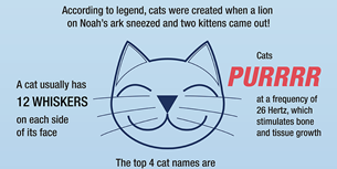 101 interesting cat facts random facts about cats