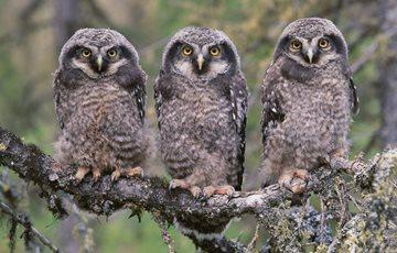 53 Interesting Facts About Owls Factretrievercom