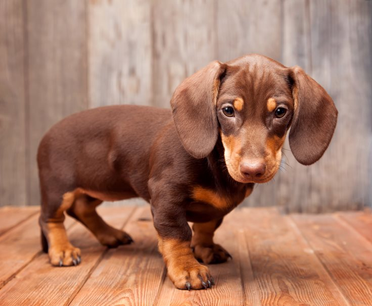 Top 10 Cutest Puppies In The World Factretrievercom