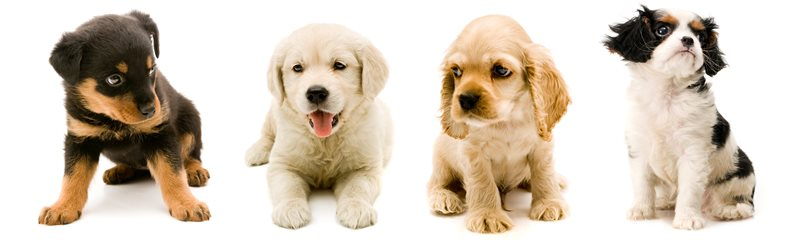 Cutest Puppies Facts