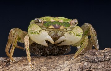 46 Interesting Facts about Crabs|Fact Retriever.com