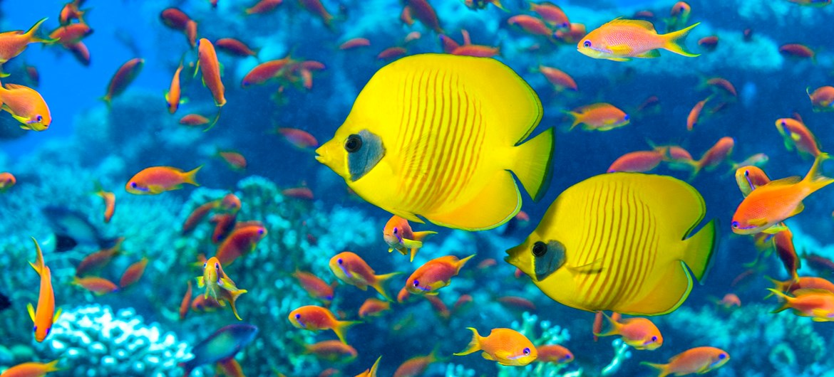 60 interesting facts about fish for Photos of fish