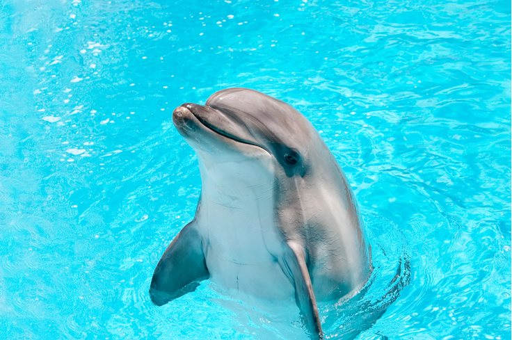 Dolphin Facts And Pictures 98