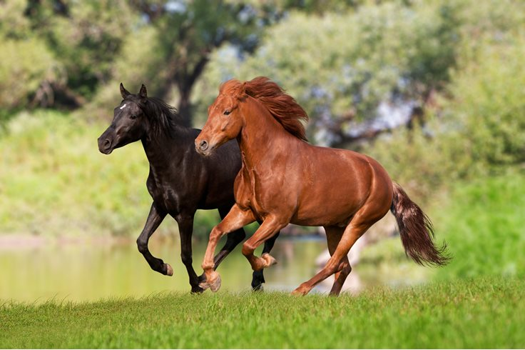 59 Wild Facts About Horses Interesting Horse Facts