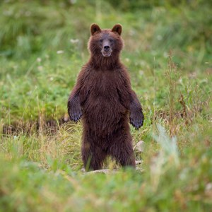 80 Interesting Facts About Bears Factretriever Com