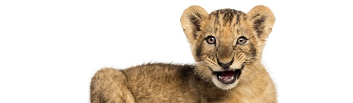 91 Roaring Lion Facts You Won't Believe | Fact Retriever