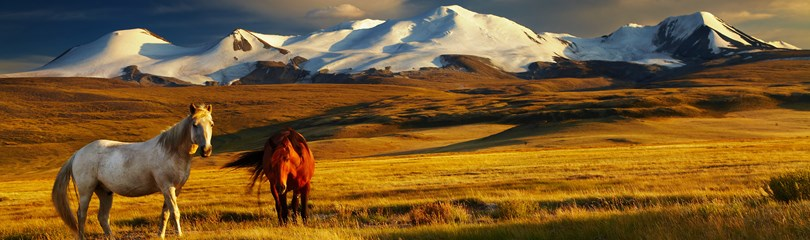 Mongolia Horse Facts