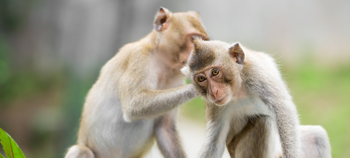 60 interesting facts about monkeys factretriever voltagebd Image collections