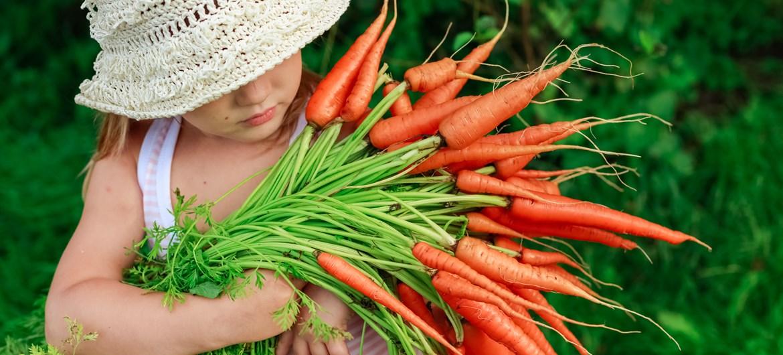 Картинки по запросу organic food