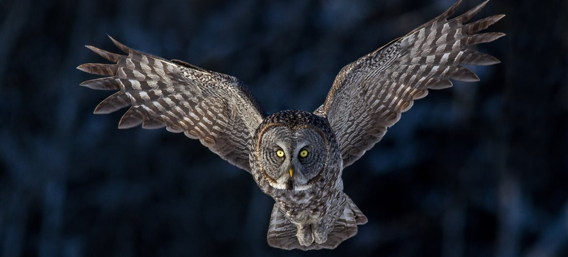 53 Interesting Facts About Owls Factretrievercom