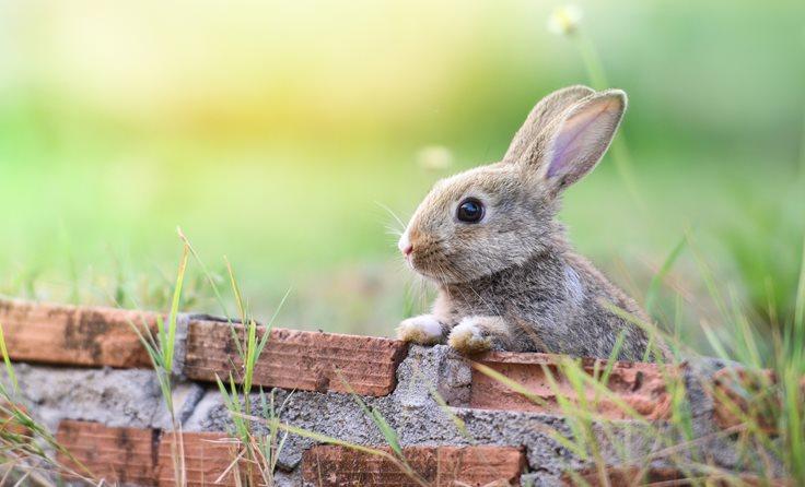 Tavşan eğlenceli gerçekler