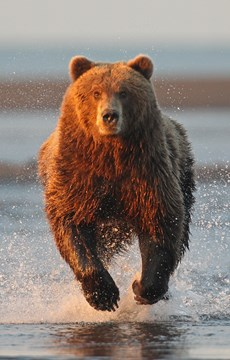 80 Interesting Bear Facts | Random Facts about Bears - photo#43