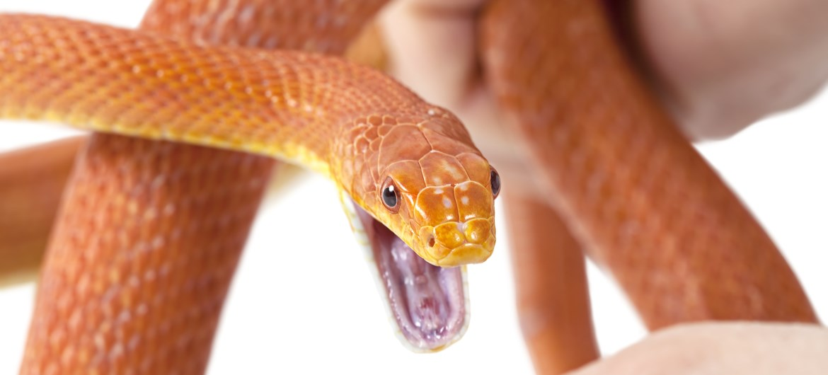 76 Interesting Facts About Snakes Factretriever