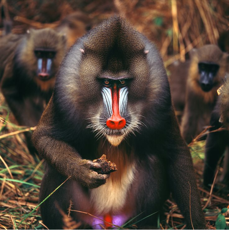 60 Interesting Facts About Monkeys Factretriever Com