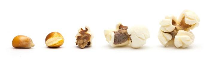Popcorn kernel popping
