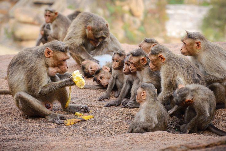 20 Amazing Monkey Fact